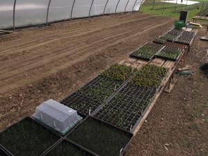 Inzwischen wachsen die ersten Jungpflanzen im Gewächshaus heran.