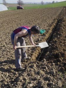 """Kanalarbeiten!? Nein, ohne Spezialgerät musste das Universalgerät """"Spaten"""" herhalten, um die Spargelpflanzen in den Boden zu bekommen."""