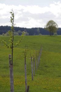 Und, nicht zu vergessen: Unsere Bäume treiben alle sehr schön aus!