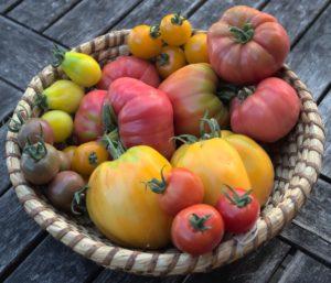 Entdecken Sie unsere Tomatenvielfalt